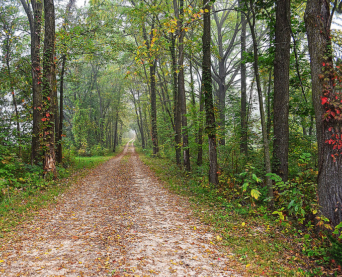 METAL: Dirt Road In Autumn