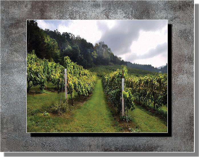 Steel Stand-Off: Hillside Vineyard