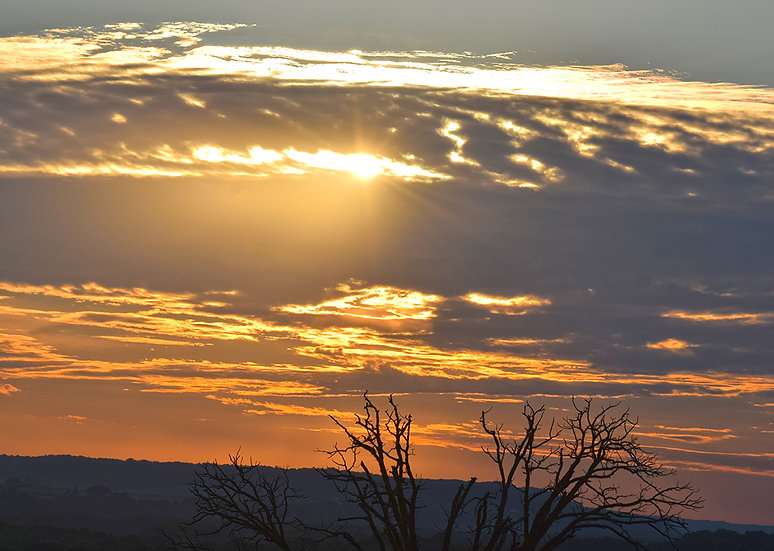 Tree Watching Sunset