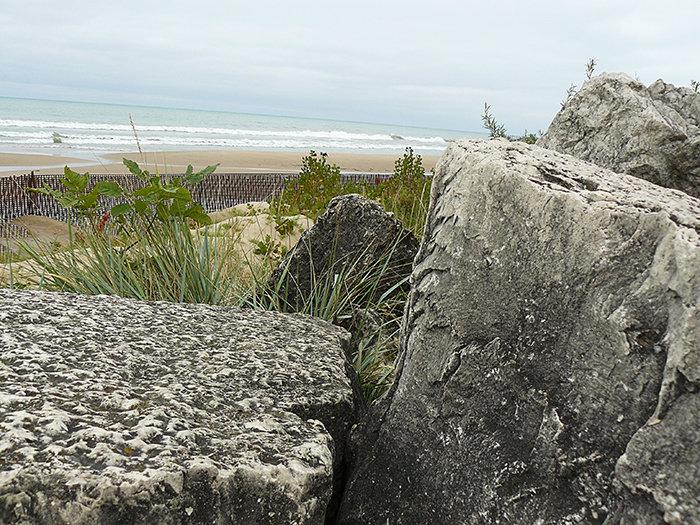 Guarding The Shore