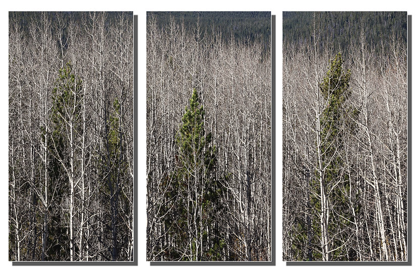 TRIPTYCH: Ghosts In The Trees
