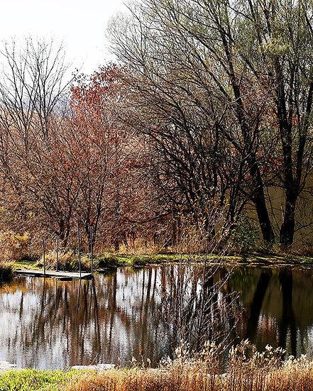 Reflecting On Autumn