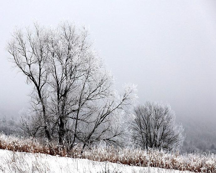 Frozen In Fog