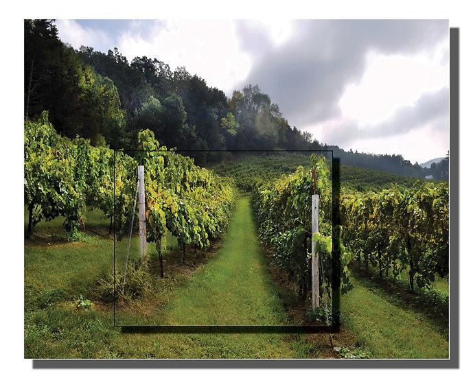 DOUBLE METAL: Hillside Vineyard