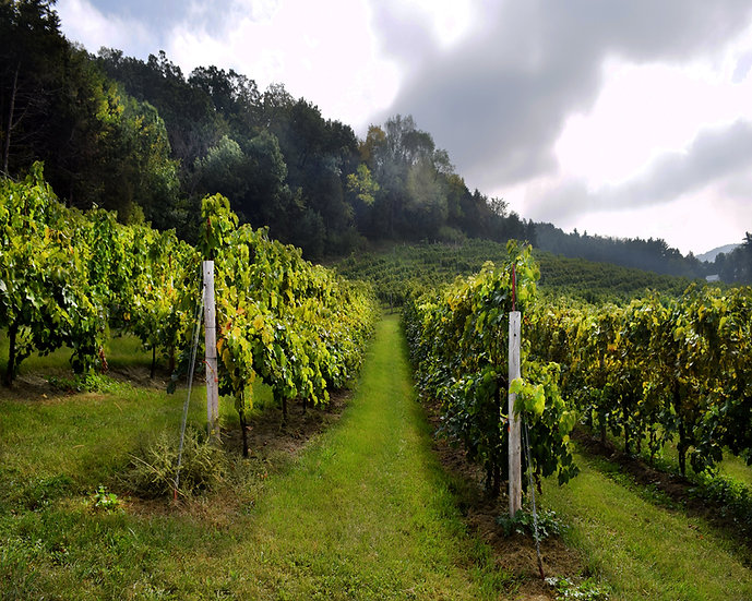 METAL: Hillside Vineyard