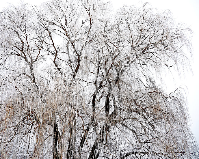 Sheathed In Ice