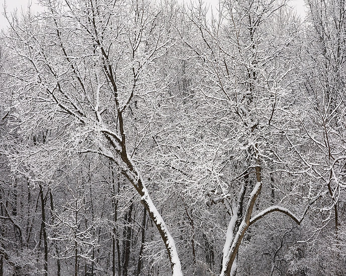 Winter's Fresh Dusting