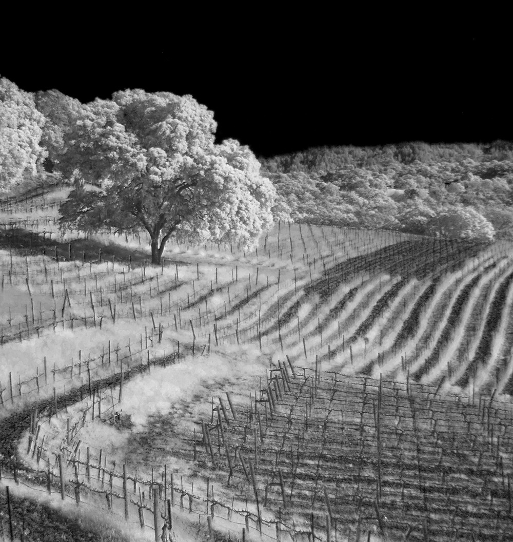 Infrared Photography | Vineyard Landscape | The Franklin Fi