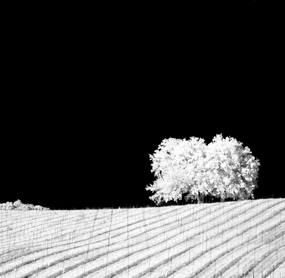 Infrared Photography | The Franklin Fi | Thoughts from the Vineyard