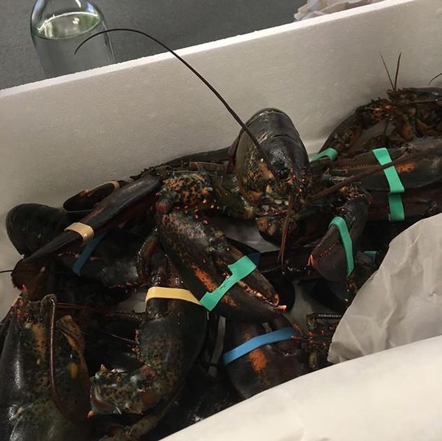 hummer lobster
