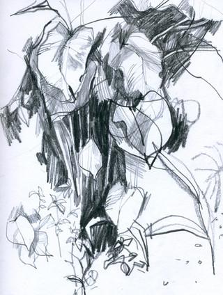 szkic_botaniczny.jpg