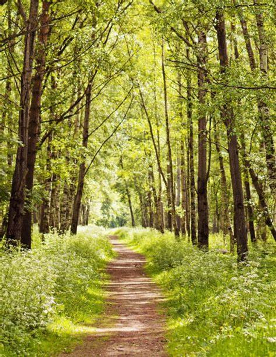 Chemin de la nature.jpg