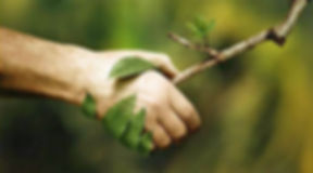 serrer la main a la nature.jpg