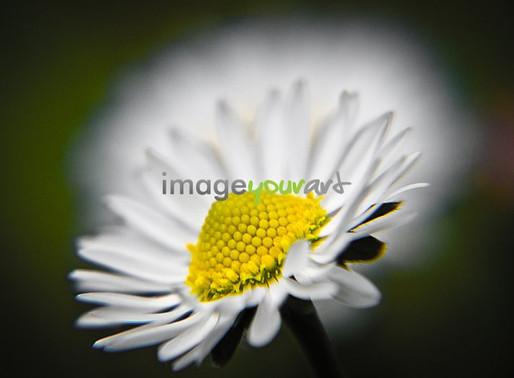 IMAGE YOUR ART - Finally .... Springtime