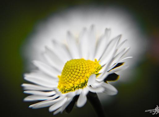 FLIIBY - Finally springtime