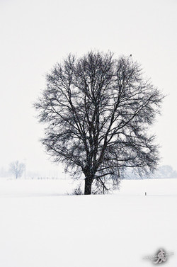 Under the snow (17)