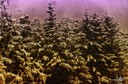 Filtered snow