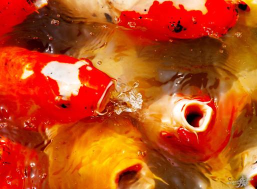 FLIIBY - Godfish
