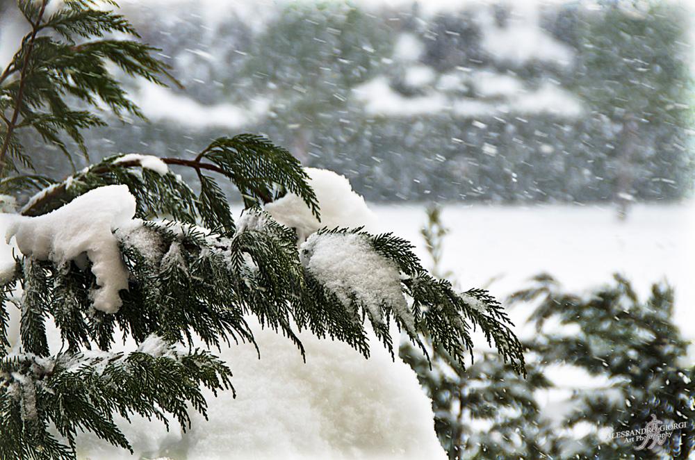 Under the snow (20)