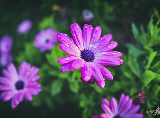 DAYLIGHTED - Beauty nature