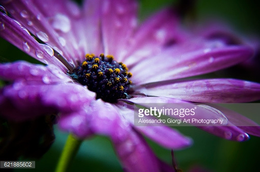 GETTY IMAGES - Drops