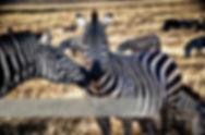 Tanzania photos