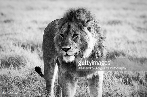 GETTY IMAGES - Wild life