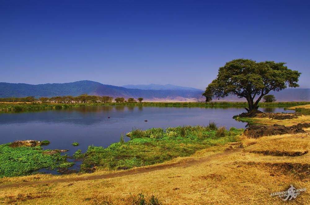 Hippo land