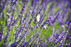 Life into the purple