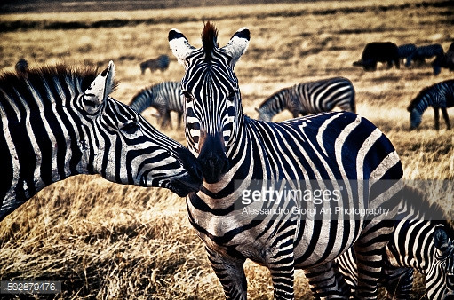 GETTY IMAGES - Friends