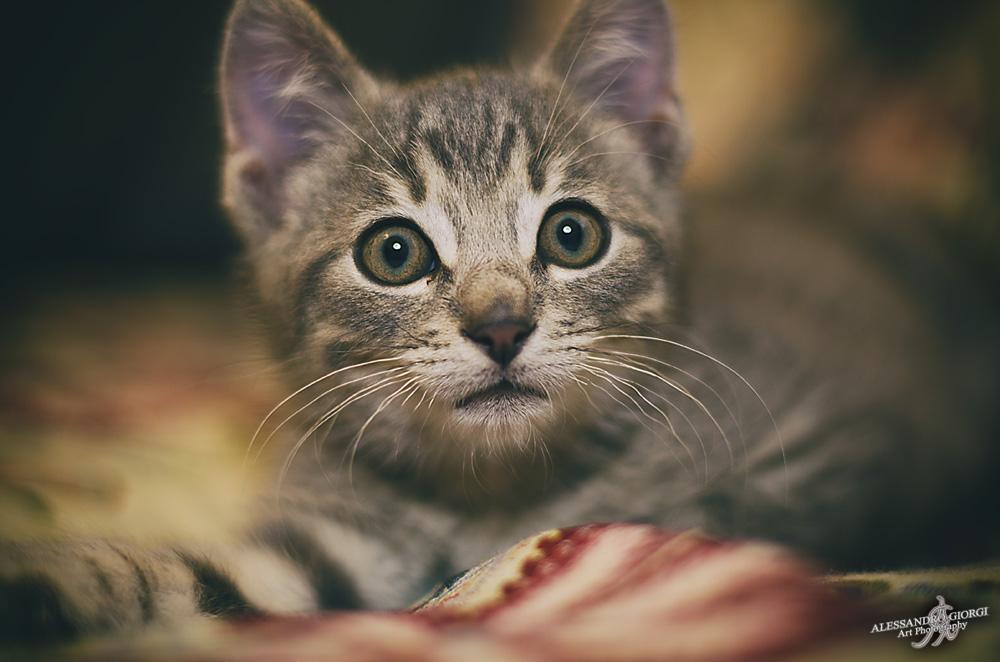 Worried little eyes