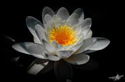 Sun into the flower