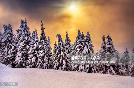 GETTY IMAGES - White trees