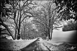 Under the snow (10)