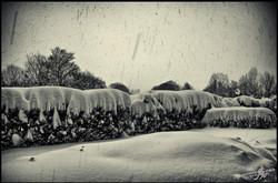 Under the snow (3)