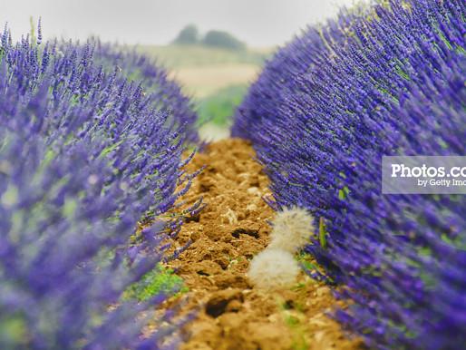 PHOTOS.COM - Provence