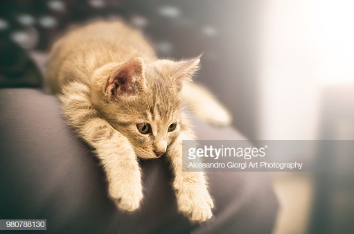 GETTY IMAGES - Bored