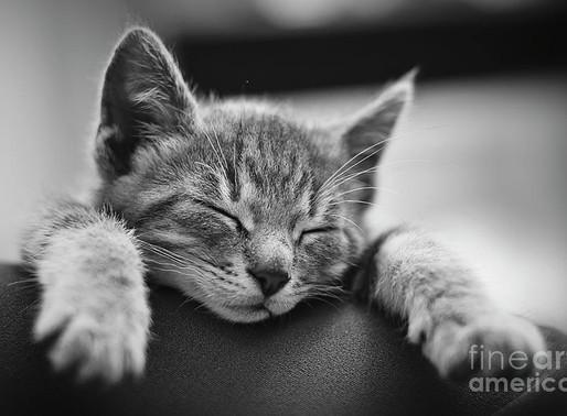 FineArtAmerica - Tired .... So tired