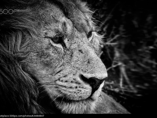 500px MARKETPLACE - King's portrait