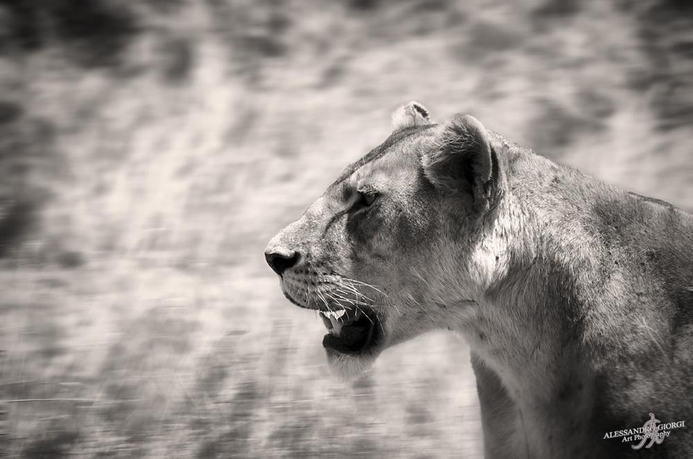 Elegance of predator