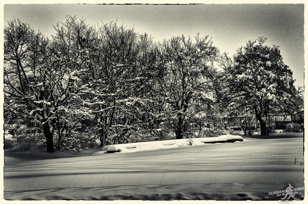 Under the snow (26)