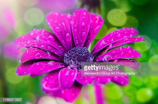GETTY IMAGES - Art of nature