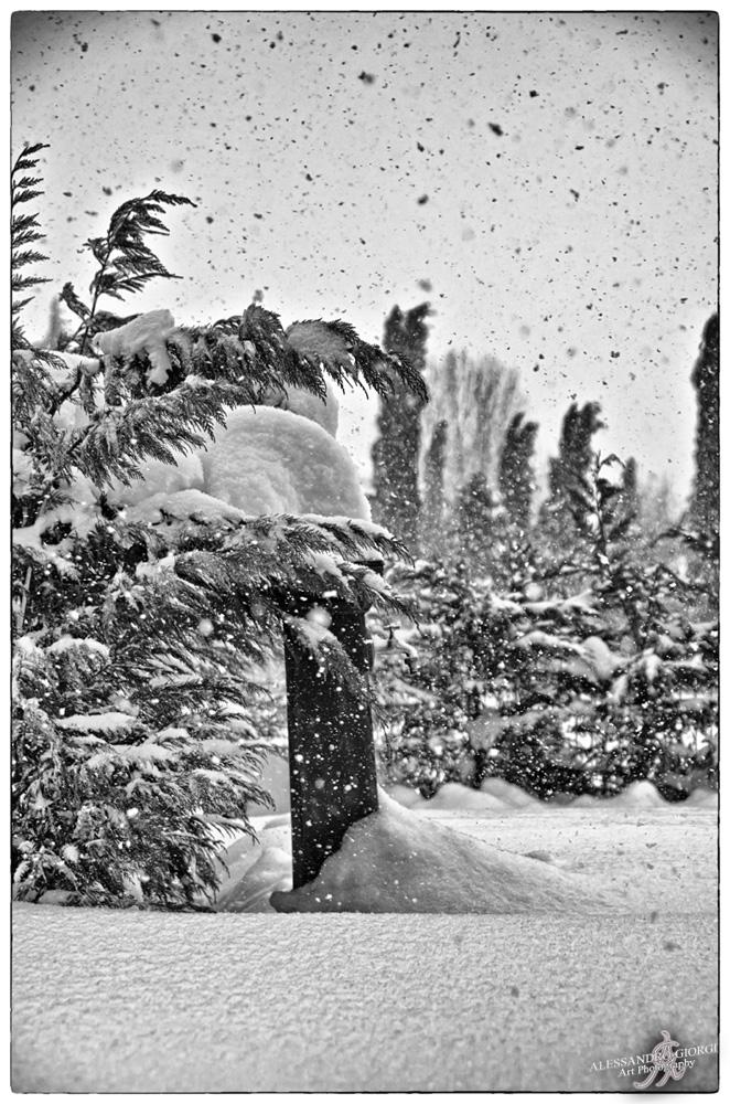 Under the snow (19)