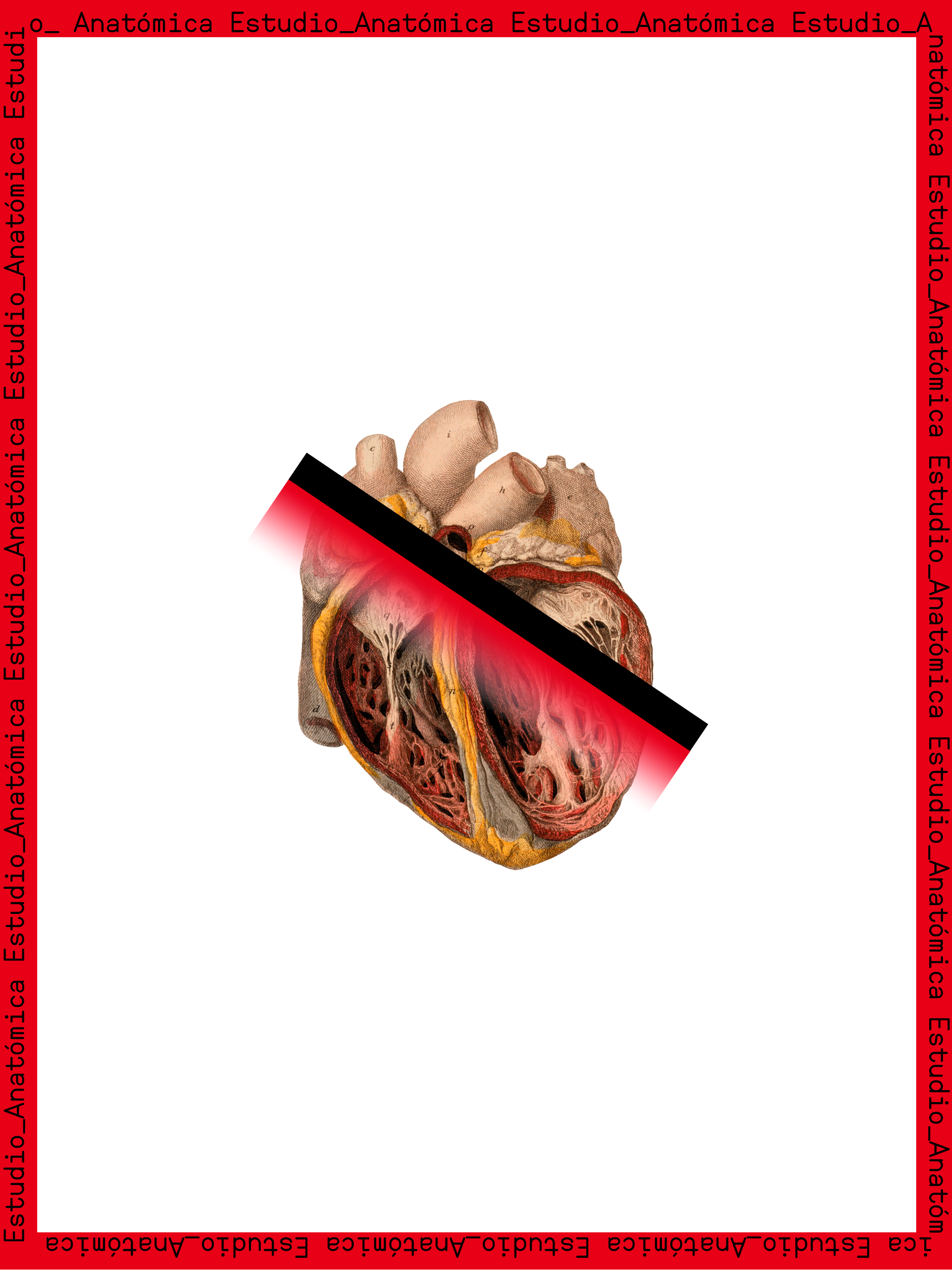 anatomica5