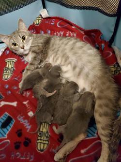 Anastasia and 6 babies