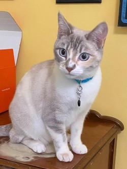 Khloe cat 3