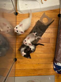 Pasta kittens