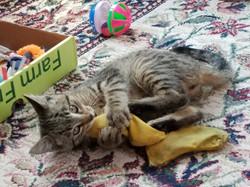 Gizmo cat2 3