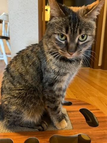 Dakota cat 3