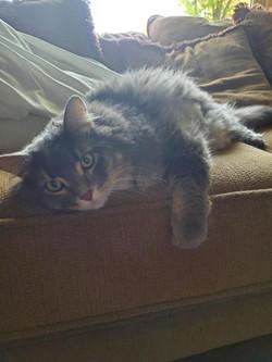Oliver cat 2